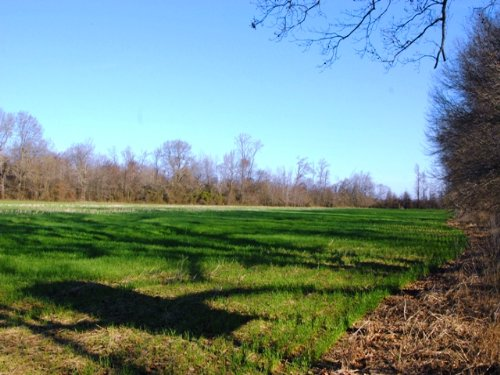 Farm And Hunting Property : Holly Grove : Monroe County : Arkansas