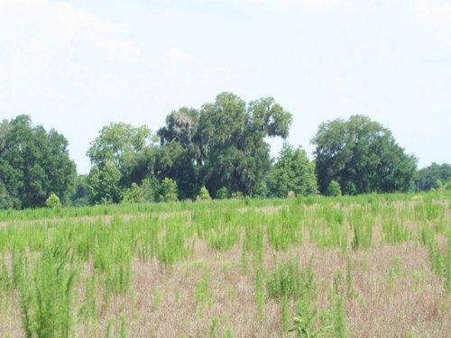 443 Acres, Alachua Fl : Alachua : Florida