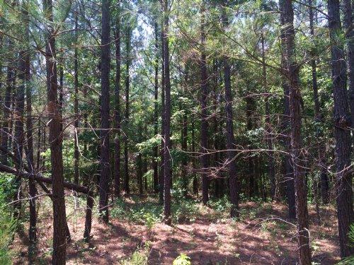 Chapman - Pines And Hardwoods : Gray : Jones County : Georgia