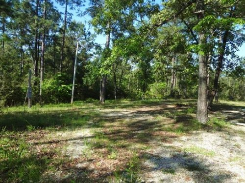 92 Ac Secluded Hunting Spot : Poplarville : Pearl River County : Mississippi