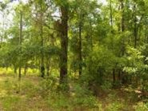 Residential Lot For Sale : Jasper : Hamilton County : Florida