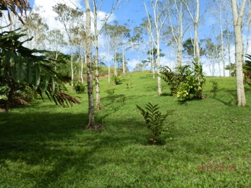 19 Acre Tree Farm W/ Creek : La Suiza De Turrialba : Costa Rica