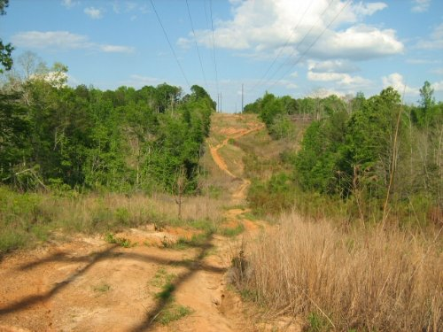 Investment-grade Timberland & Cheap : Fayette : Alabama