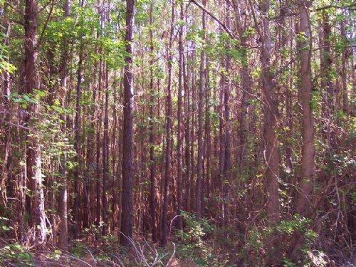 Wampee Tract : Eutawville : Orangeburg County : South Carolina