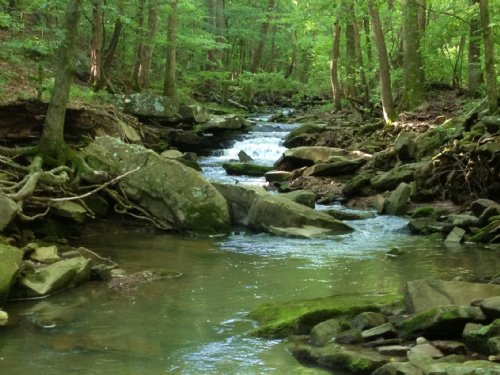 10+/- Acres With Creek And Spring : Mountain View : Stone County : Arkansas