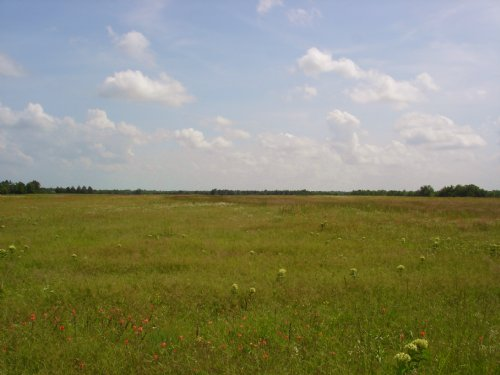 101 Acre Ranch / Investment Land : Sumner : Lamar County : Texas