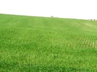 1,353 Acres Crop, Hay & Grass Land : Ree Heights : Hand County : South Dakota