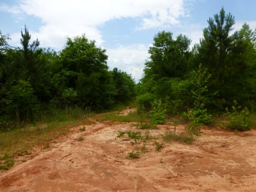 126 Acres : Dry Branch : Twiggs County : Georgia