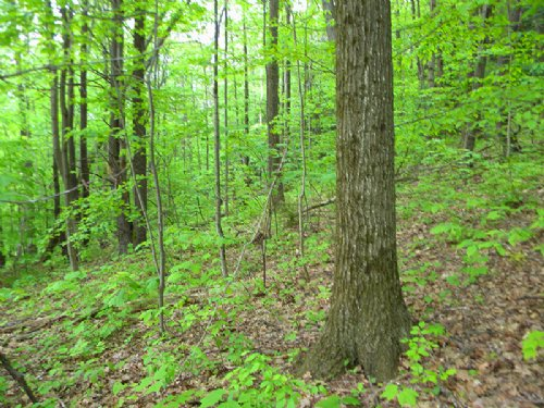 Wooded Acreage Finger Lakes Region : Big Flats : Chemung County : New York