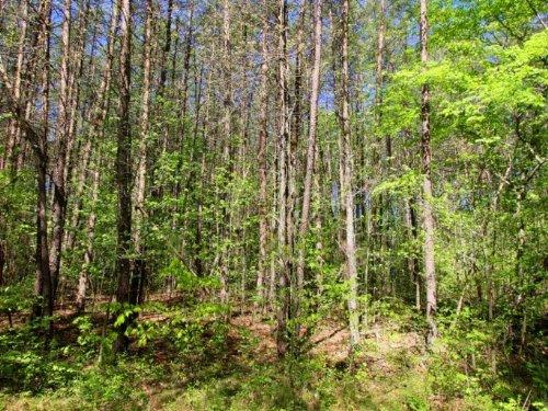 1.22 Acres Lake Anna Neighborhood : Mineral : Louisa County : Virginia
