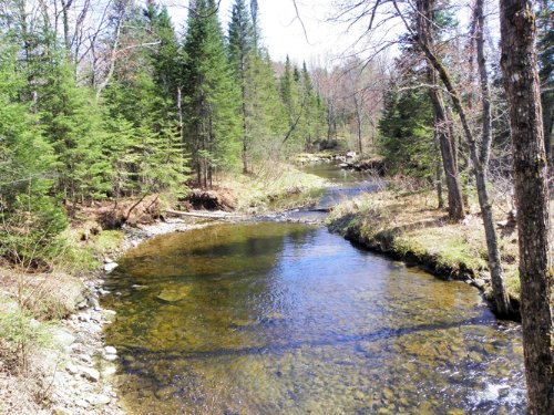 Lemon Stream Forest : Anson : Somerset County : Maine