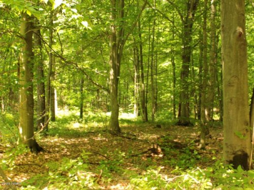 Hilly And Wooded 10 Acres : Branch : Mason County : Michigan