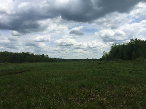 Deer Run Meadows : Croghan : Lewis County : New York