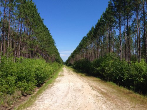 548 Acres Barney Rd Timberland : Homerville : Clinch County : Georgia