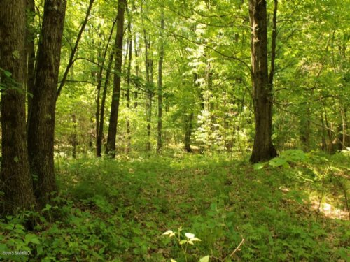 Wooded 40 Acres : Holton : Muskegon County : Michigan