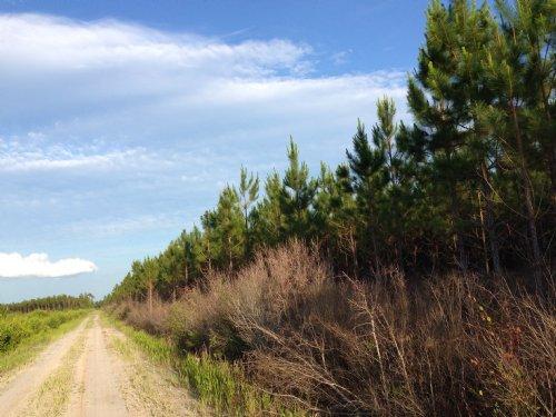 Bickley Rd Timber Plantation : Waycross : Ware County : Georgia