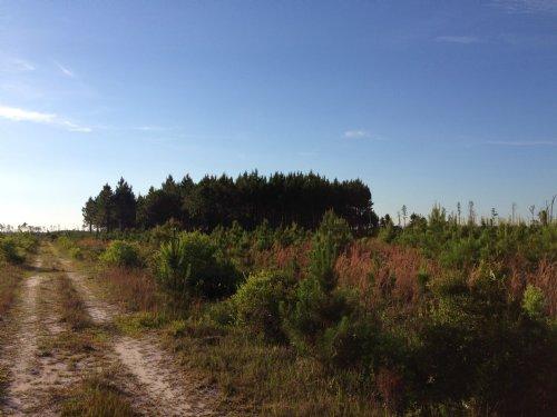 Swamp Rd Recreation & Timber : Waycross : Ware County : Georgia