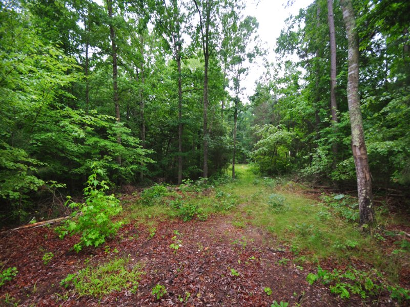 5.50 Acres Vacant Land Off 64 Hwy : Pittsboro : Chatham County : North Carolina