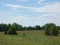87.859 Ac Hunting Recreation Tract : Crawfordville : Taliaferro County : Georgia