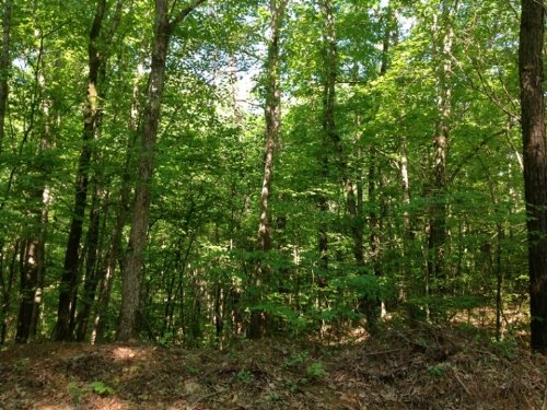 82 Acres Blue Creek Road : Northport : Tuscaloosa County : Alabama
