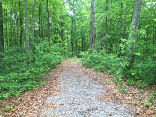 5+/- Acres On Fredonia Mtn : Dunlap : Sequatchie County : Tennessee