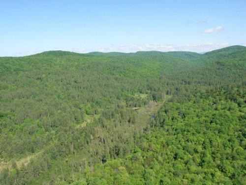 Bear Notch Forest : West Fairlee : Orange County : Vermont