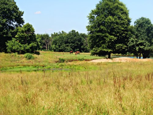 183 Acre Equine Ranch For Sale : Detroit : Red River County : Texas