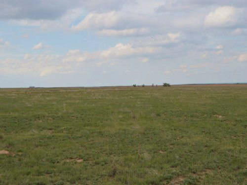 Grass Land : Chivington : Kiowa County : Colorado