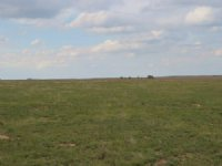 Grass Land : Chivington : Kiowa County : Colorado