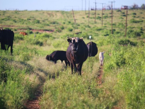 400 Acre Ranch For Sale : Electra : Wichita County : Texas