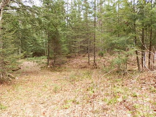 14.20 Acres On Stone Lake : Sherman : Iron County : Wisconsin
