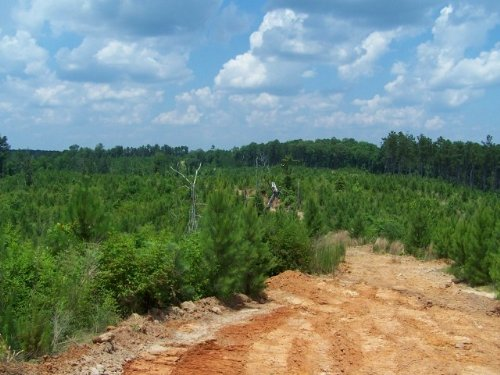 320 Ac - Timberland & Hunting T : Columbia : Caldwell Parish : Louisiana
