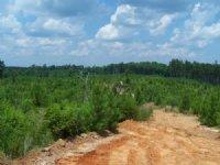320 Ac - Timberland & Hunting T : Columbia : Caldwell Parish : Louisiana