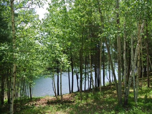 3.85 Acres North Two Lakes : Lake Tomahawk : Oneida County : Wisconsin