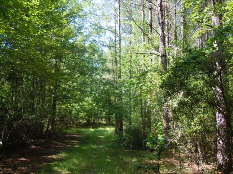 Scull Creek : Millen : Jenkins County : Georgia