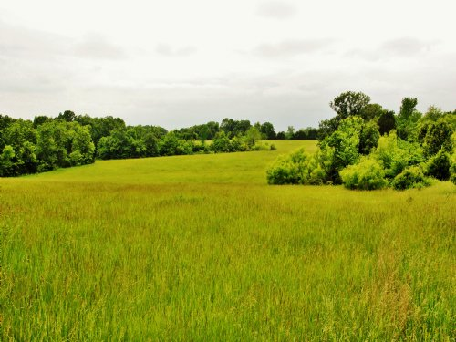 277 Acres Buechele Rd : Jonesburg : Montgomery County : Missouri