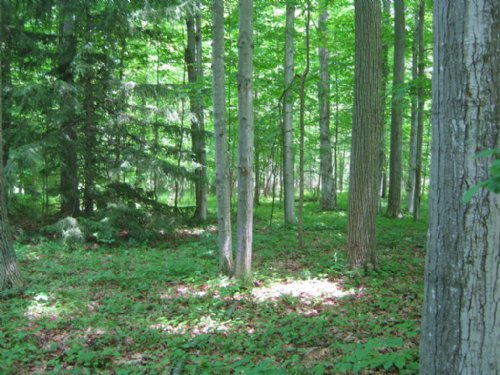 Wooded Building Lot Near Ithaca : Ulysses : Tompkins County : New York