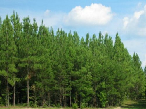 Abundance Of Frontage : Phenix : Charlotte County : Virginia