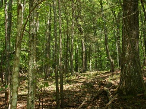 3.403 Wooded Acres, Owner Financing : Elk Creek : Grayson County : Virginia