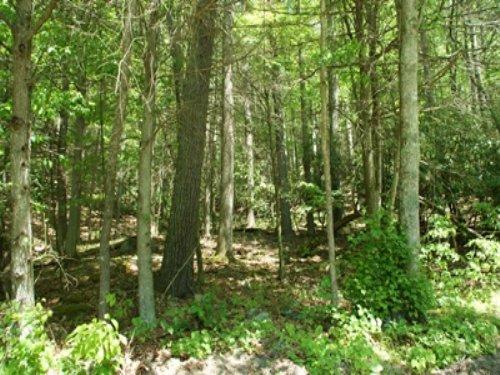 3.021 Wooded Acres, Owner Financing : Elk Creek : Grayson County : Virginia