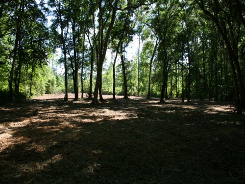 Land For Sale With Big Oaks Tract 5 : Kingsland : Camden County : Georgia