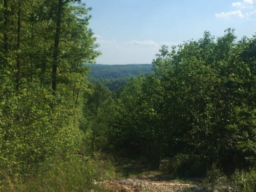 69.95+/- Acres With A View : Gruetli Laager : Marion County : Tennessee