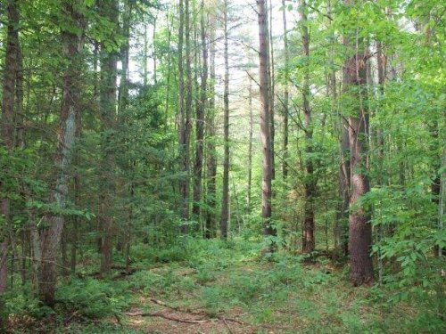 Land In Adirondacks Driveway 10 Ac : Salisbury : Herkimer County : New York