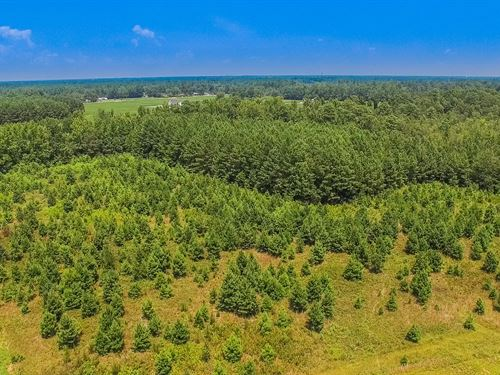 Farm & Hunting Near Darlington : Darlington : South Carolina