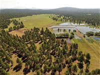 Spectacular Williams, Az 160 Acre : Williams : Coconino County : Arizona