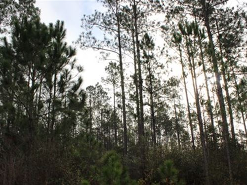 102 Acres On A Paved Road : Waycross : Ware County : Georgia