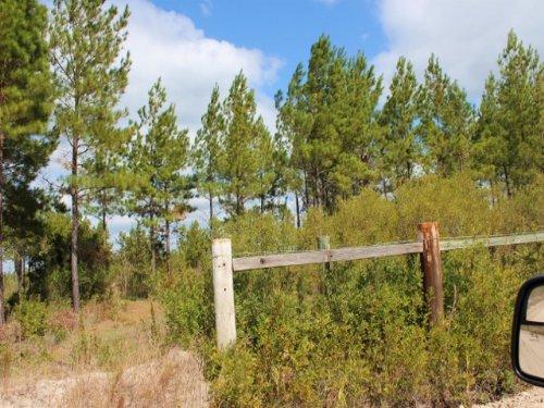 49.88 Acres To Hunt Or Live : Waycross : Ware County : Georgia
