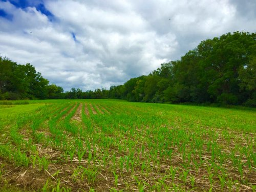 83+/- Acre Farm : Nescopeck : Luzerne County : Pennsylvania