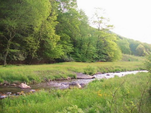 Helton Creek Frontage Near Highland : Whitetop : Grayson County : Virginia
