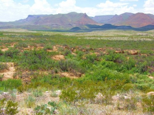 Tract 8122, 56 Acres In West Texas : Terlingua : Brewster County : Texas